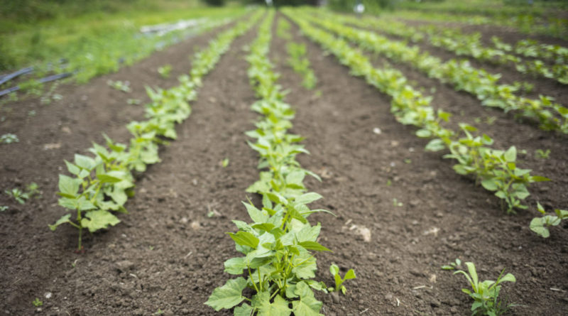 Harnessing the power of AI to transform agriculture