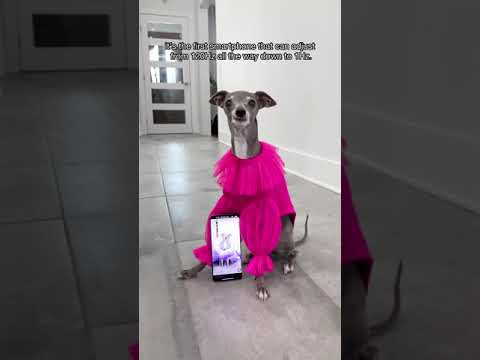 The latest must-have accessory in canine fashion? LTPO display technology on the #OnePlus9Series!